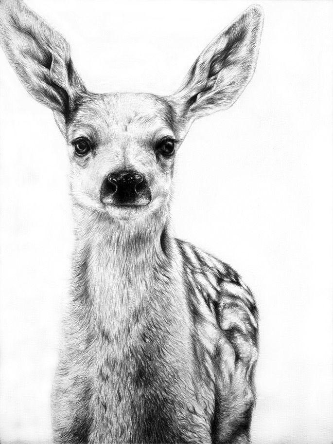 Drawn reindeer realistic 25+ Modern Best Animal paintings