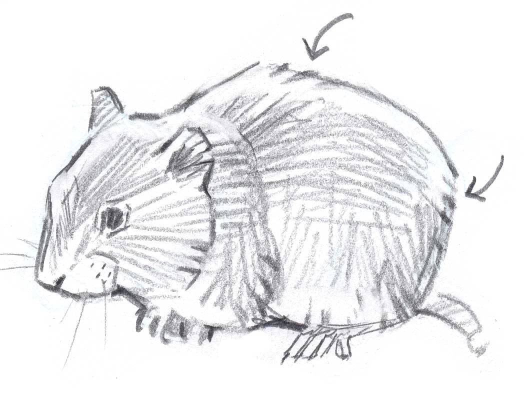 Drawn rodent lion Used in as texture to