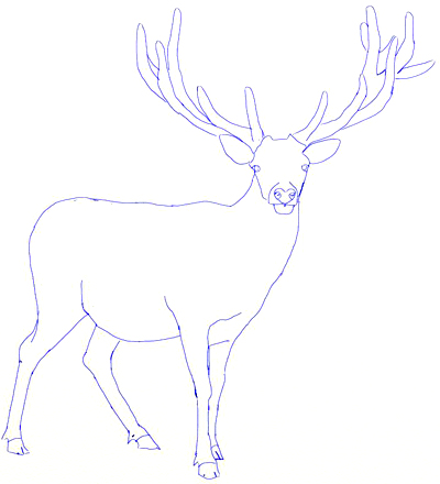 Drawn stag deer drawing Deer step by Draw a