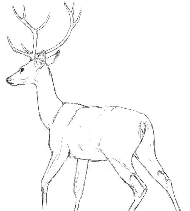 Drawn reindeer animated ✤ na na 17 DESIGN