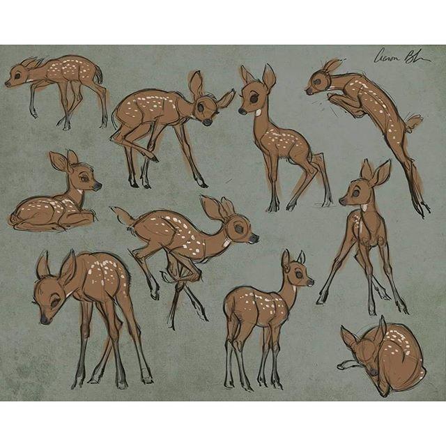 Drawn buck majestic Počet deer najlepších Sketching Drawing