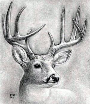 Drawn buck black and white Head dear Drawing a to