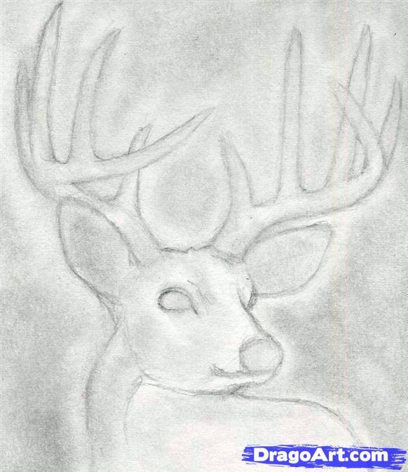 Drawn buck deer head An draw to deer a