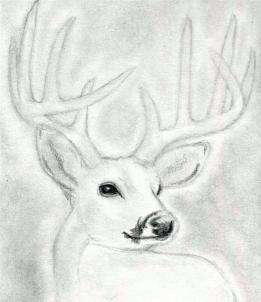 Drawn stag monster Step deer 6 to Draw