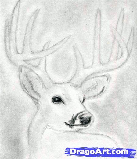 Drawn buck big buck To Head a Dear Buck