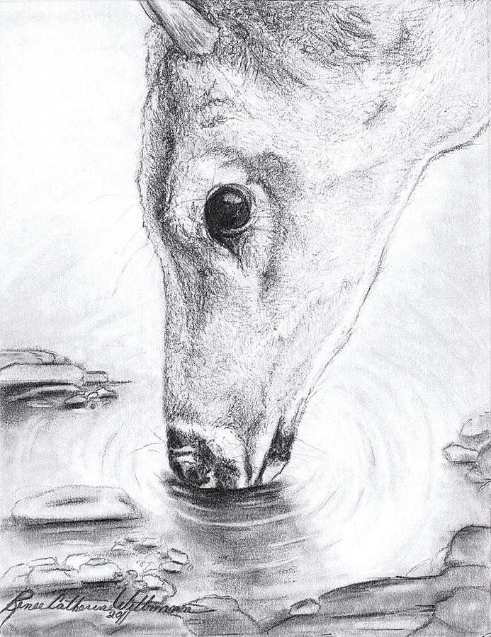 Drawn buck drinking water Wittmann Drink Needed Renee A