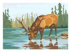 Drawn stag drinking water Stag by Painting Watercolor Water