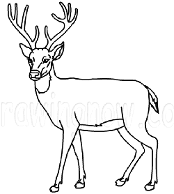 Drawn buck easy Deer Drawing to How How