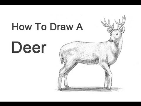 Drawn reindeer easy draw To  a Deer YouTube