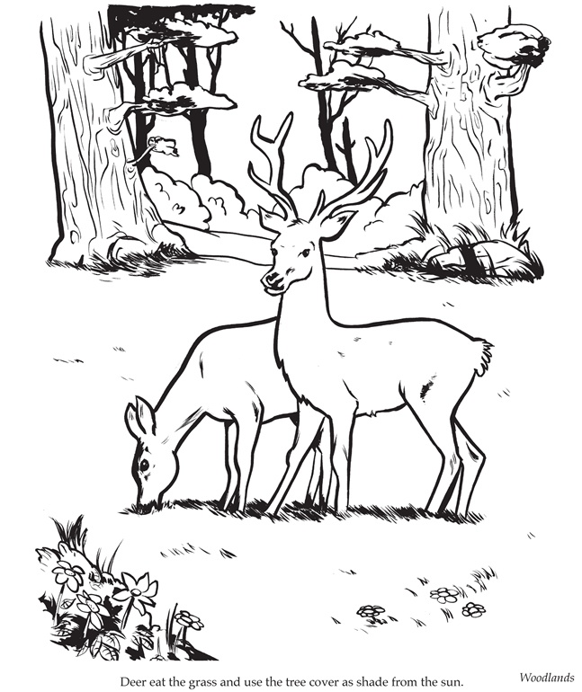 Drawn buck eating Deer 463 on best images
