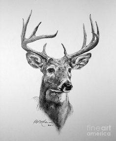Drawn buck deer head Pinterest Buck Drawing … Fine