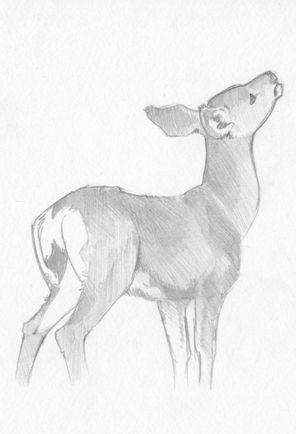 Drawn buck pencil sketch Sketch by Deer com on