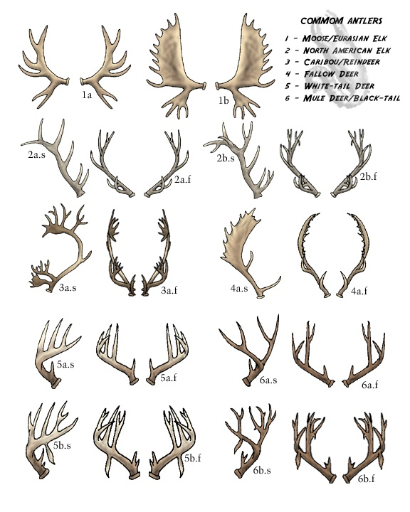 Drawn stag deer antler A Pinterest Chart S 127