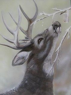 Drawn reindeer pinterest To Pinterest  Kim by