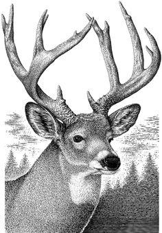 Drawn buck monster Pencil Pinterest of drawing deer