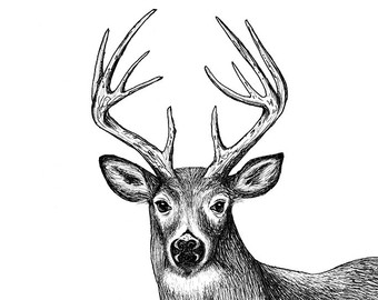 Drawn reindeer pen and ink Deer Ink White 5x7 and