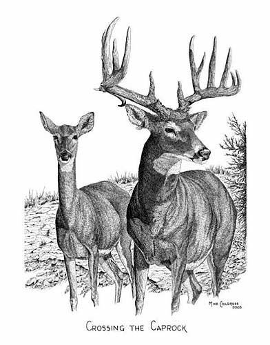 Drawn buck pen and ink  Pen Mike Drawings Childress