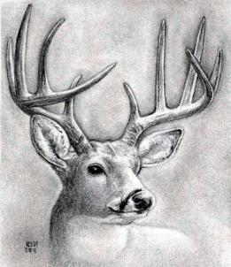 Drawn buck deer head To head deer dear a