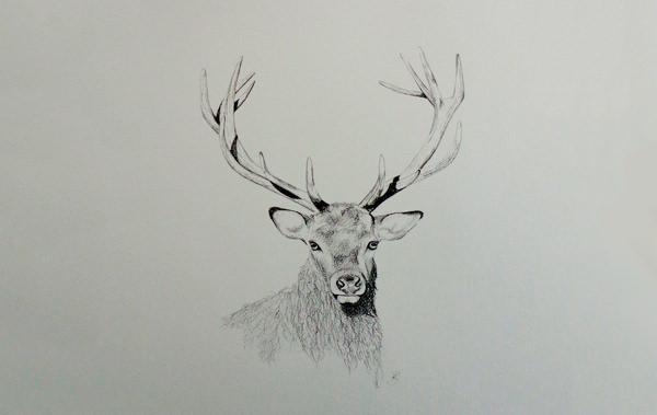Drawn buck pencil sketch Deer Pencil Free Free Deer