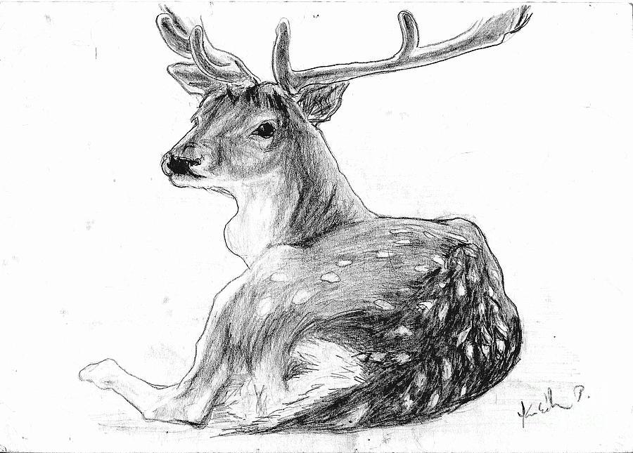 Drawn buck pencil sketch Gt; deer Deer pencil Pencil