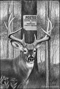 Drawn buck pencil sketch Bull Deer Pencil drawing for