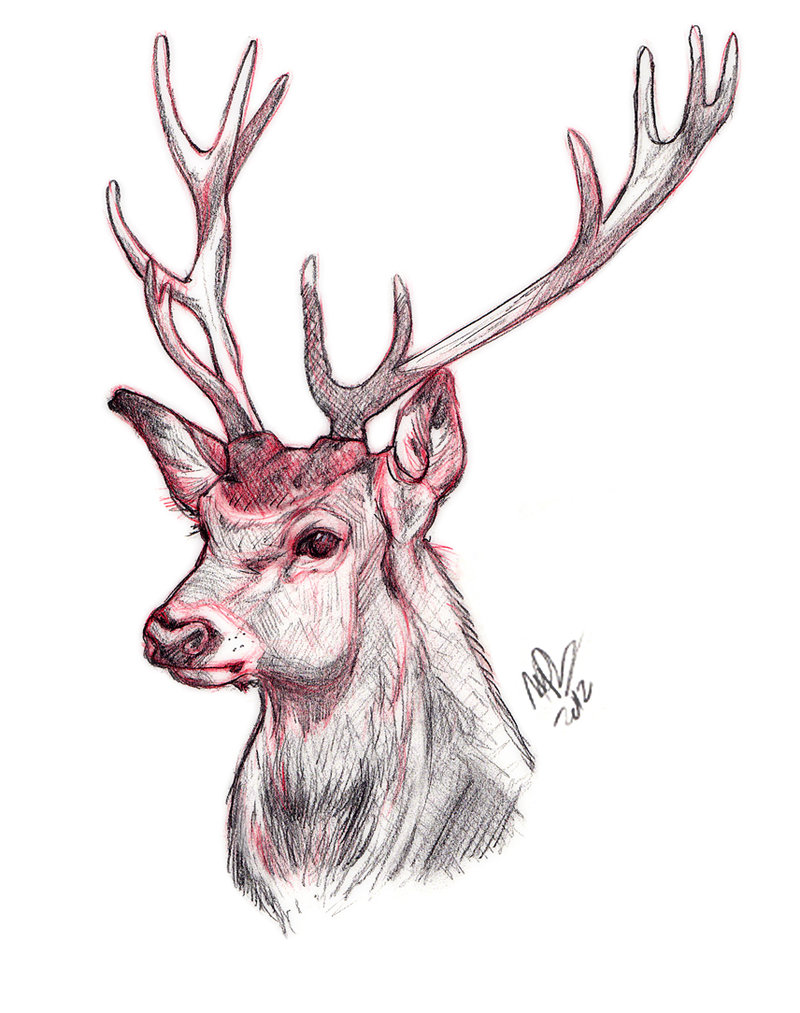 Drawn stag traditional Deviantart helloheath Sketch Deer com