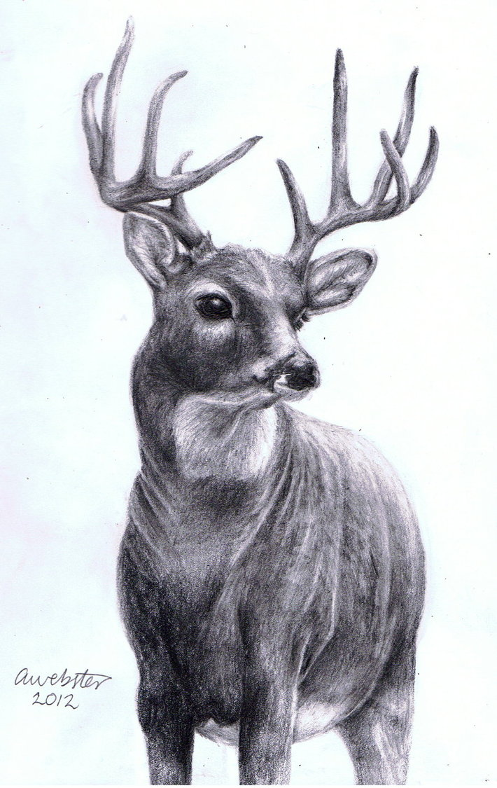 Drawn reindeer realistic On annoKat Realistic Realistic by