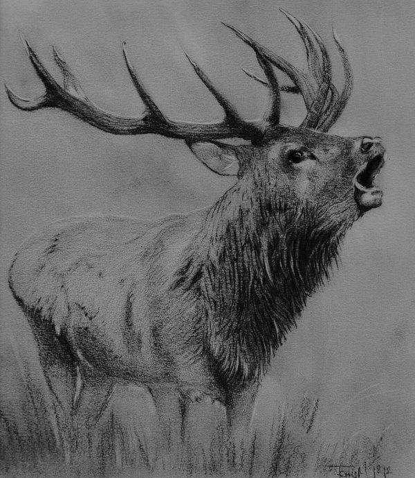 Drawn stag deviantart DeviantArt Stag roaring roaring on