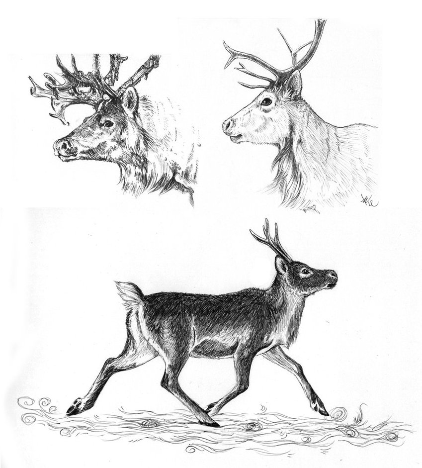 Drawn reindeer sketch Draw A Reindeer Deer DeviantArt