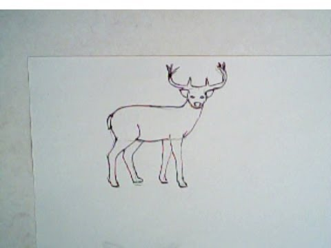 Drawn buck easy Buck to lesson) YouTube (simple