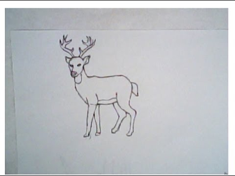 Drawn buck eating How How to tutorial) drawing