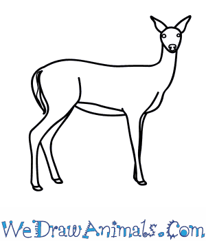 Drawn buck eating  How Deer to Draw