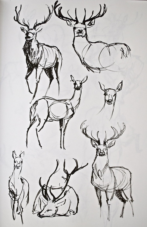 Drawn reindeer pinterest By if the the look