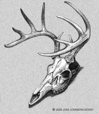 Drawn hunting profile Skull 2010 25+ best ideas