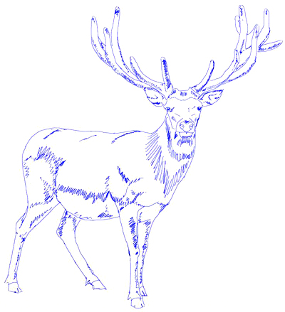 Drawn reindeer sketch Step by to draw a