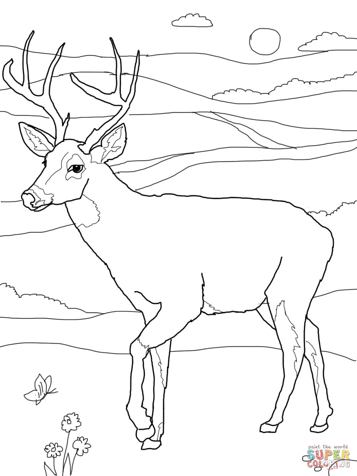 Buck clipart coloring page White Coloring Printable Free Tailed