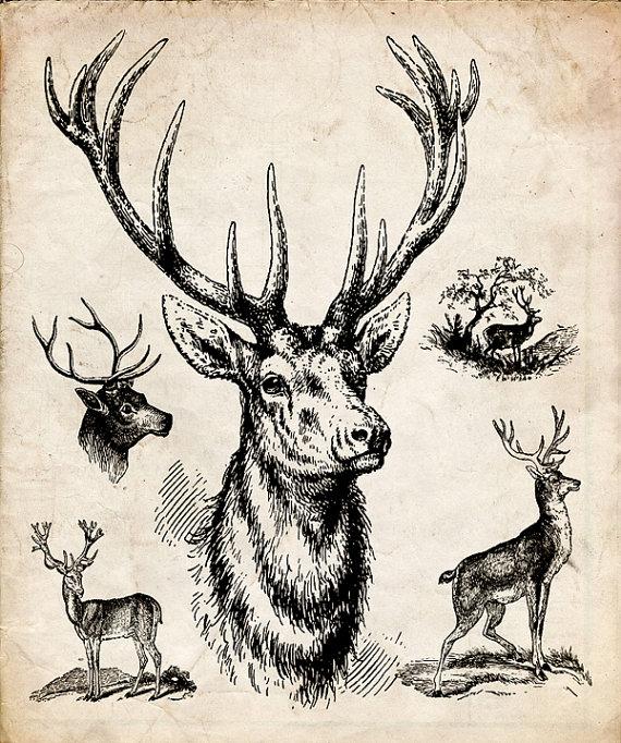 Drawn reindeer printable History drawing