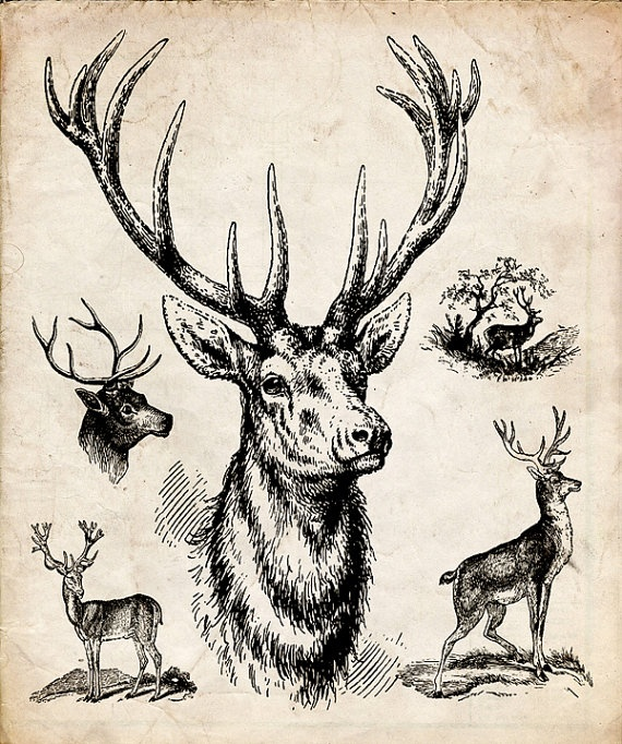 Drawn stag monster Deer