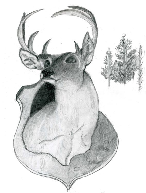 Drawn buck big buck Buck: snowy deer was at
