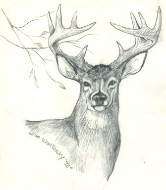 Drawn buck pencil sketch Designs sketch Buck 8 10