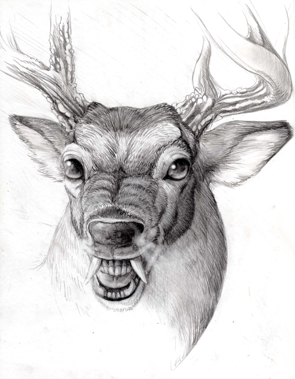 Drawn buck traditional By by on Buck Swamp