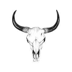 Drawn bull black and white Gordon Skull Bull colored Bull