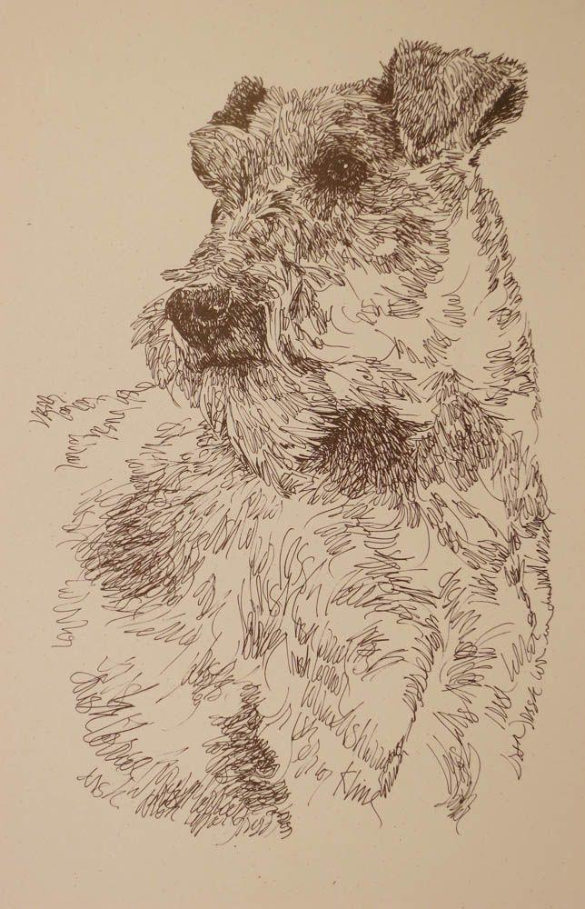 Drawn stare plain Irish Dog portraits 42 art