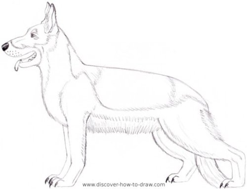 Drawn dog Dog moasics Pinterest German Drawing