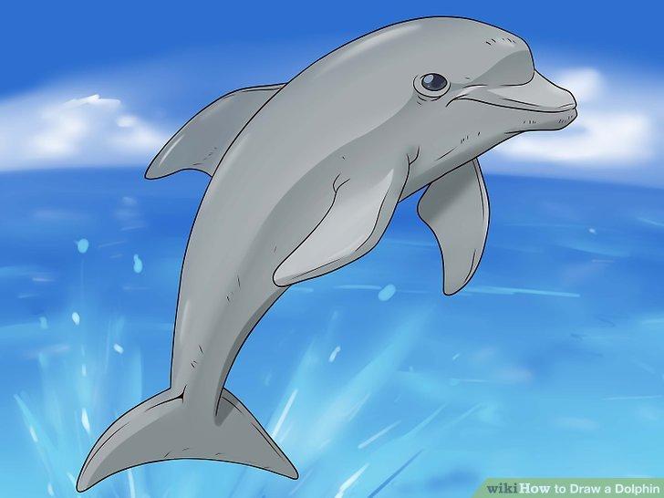 Drawn dolphin Draw 14 wikiHow a Steps