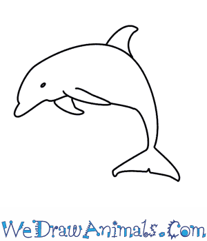 Drawn dolphins Draw  A How Dolphin