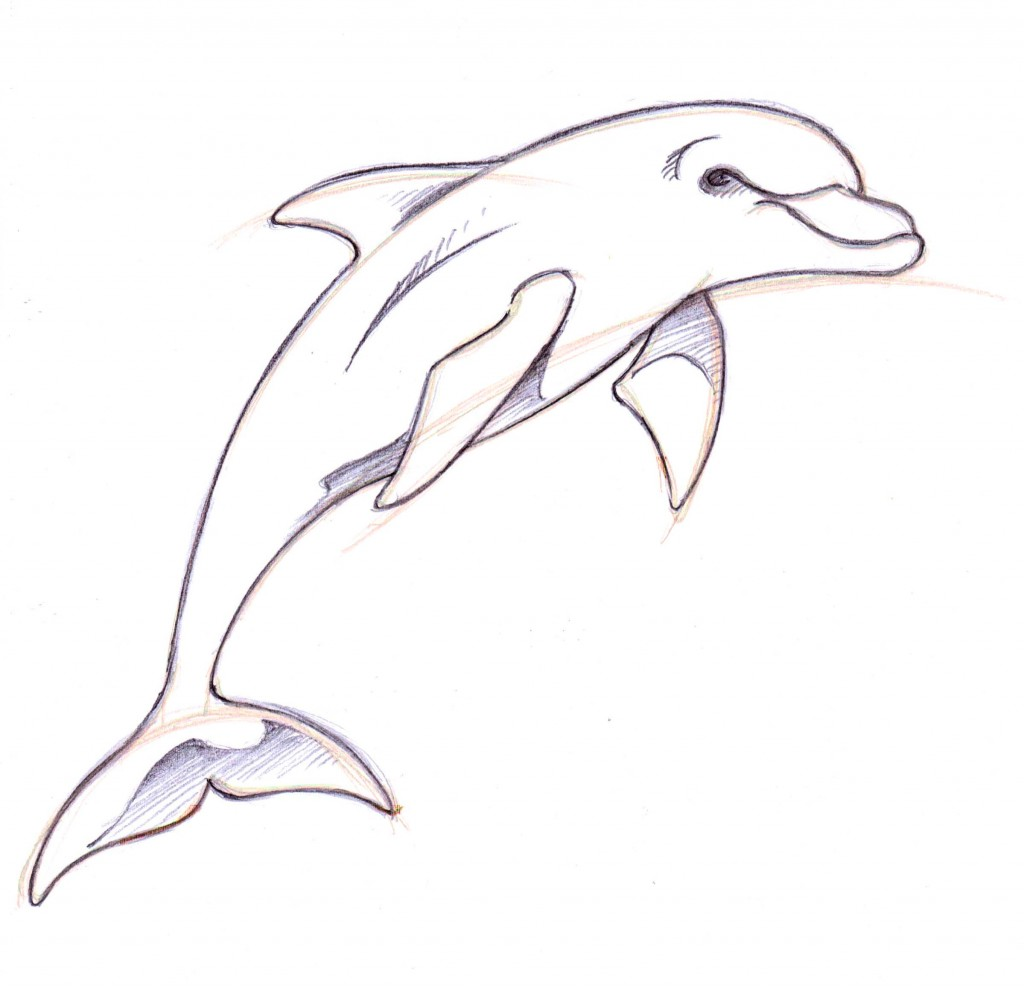 Drawn dolphin Ideas Dolphin  Pencil A