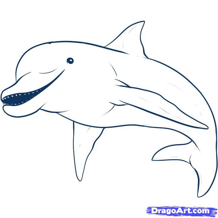 Drawn dolphin  Draw Step animals a