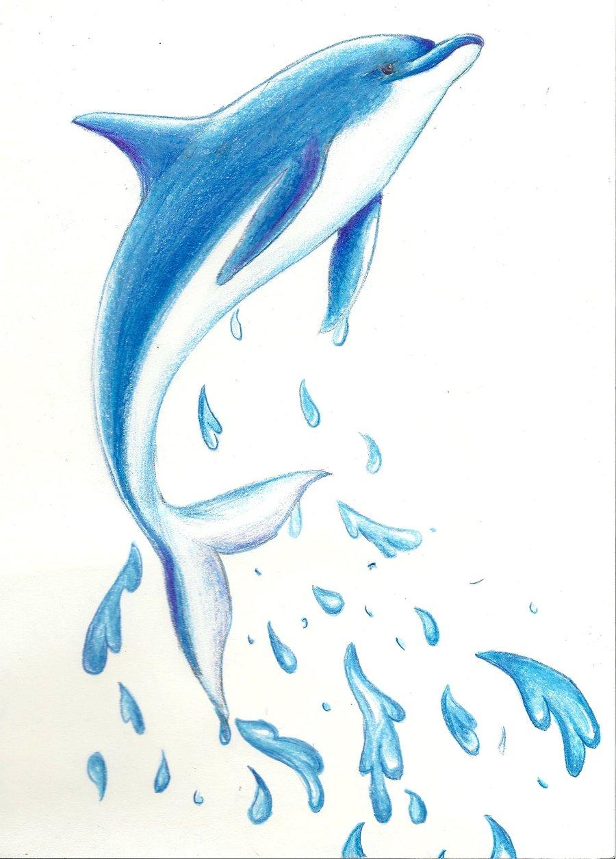 Bottlenose Dolphin clipart drawn #1