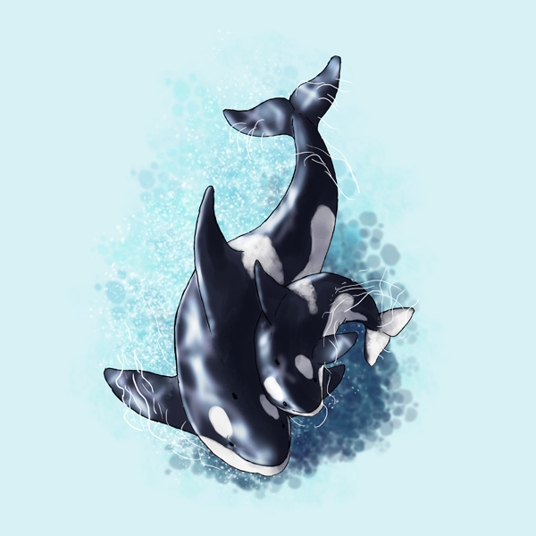 Drawn whale baby whale And killer 6 Dolphins to